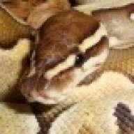 SnakeManJayd