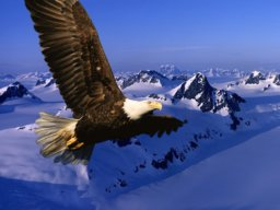 pp_eagle